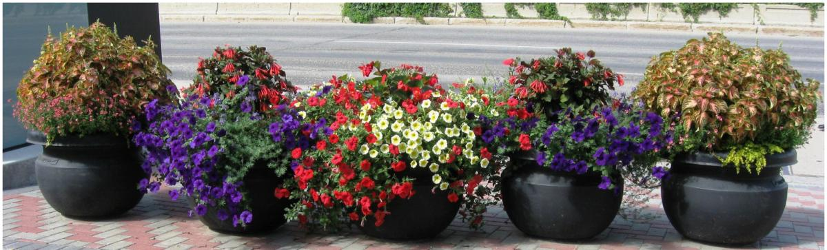 Planted flowerpots along 25th street
